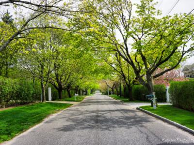 Hampton NY